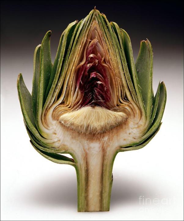 artichoke-heart-james-vicari